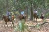 Lssi_horseback_in_woods_3